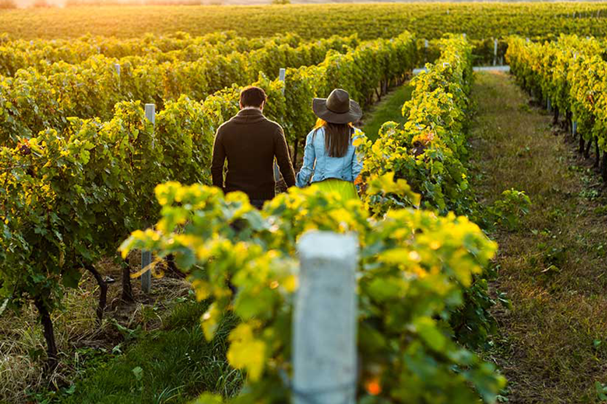 Canberra Winery Tours, Canberra Wine Region